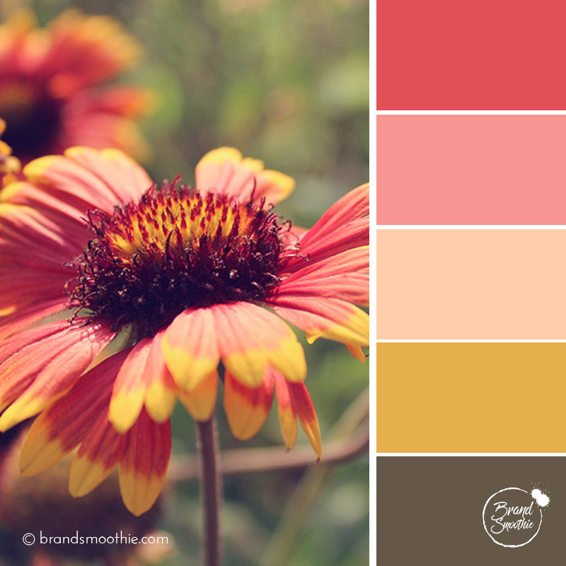 BS-colour-palette-red-summer