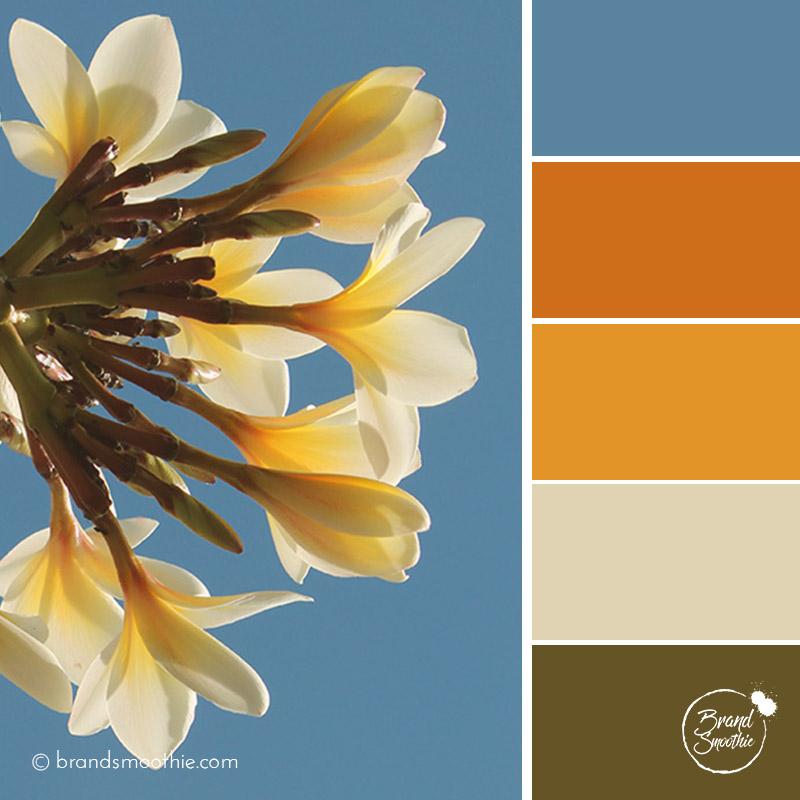 BS-colour-palette-tropical-sky