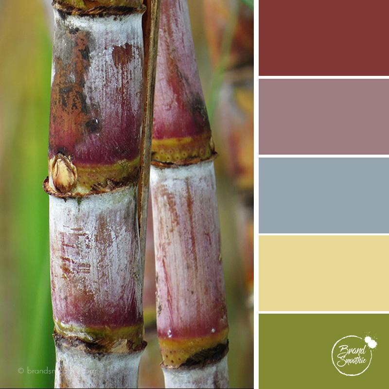 BS colour palette sugar cane