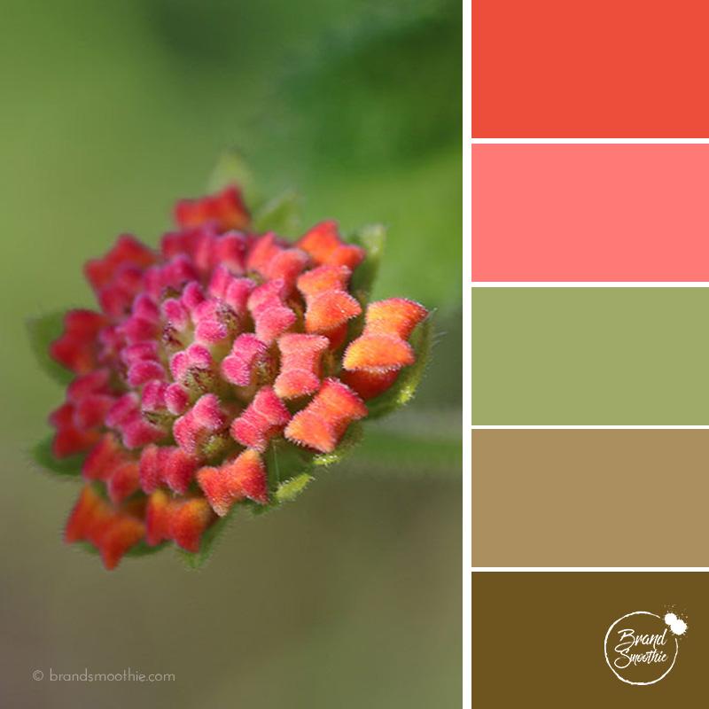 BS colour palette coral flower