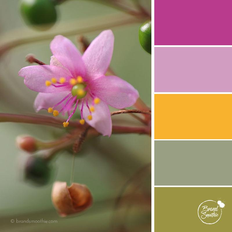 BS colour palette pink flower