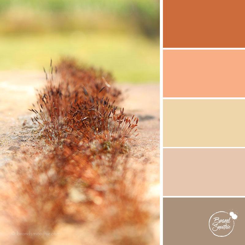 BS colour palette earthy tone