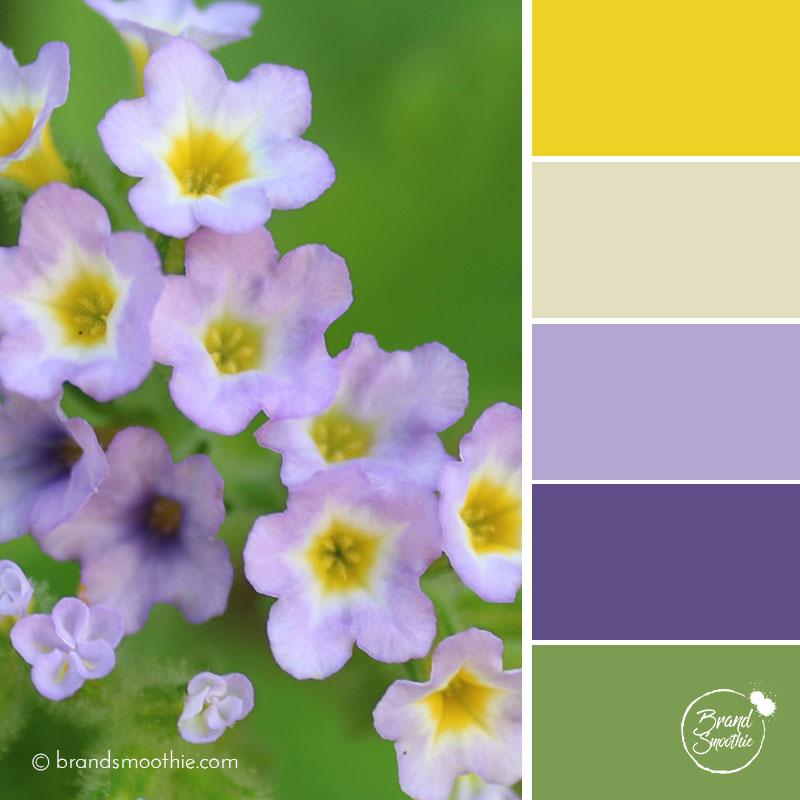 bs-colour-palette-delicate-purple