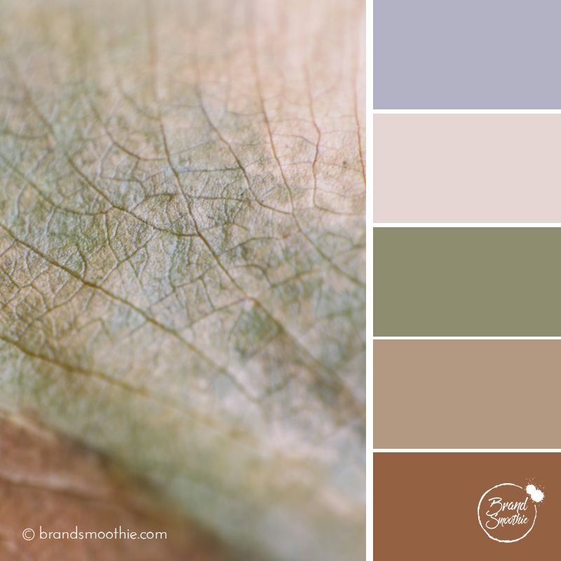 bs-colour-palette-dry-leaf