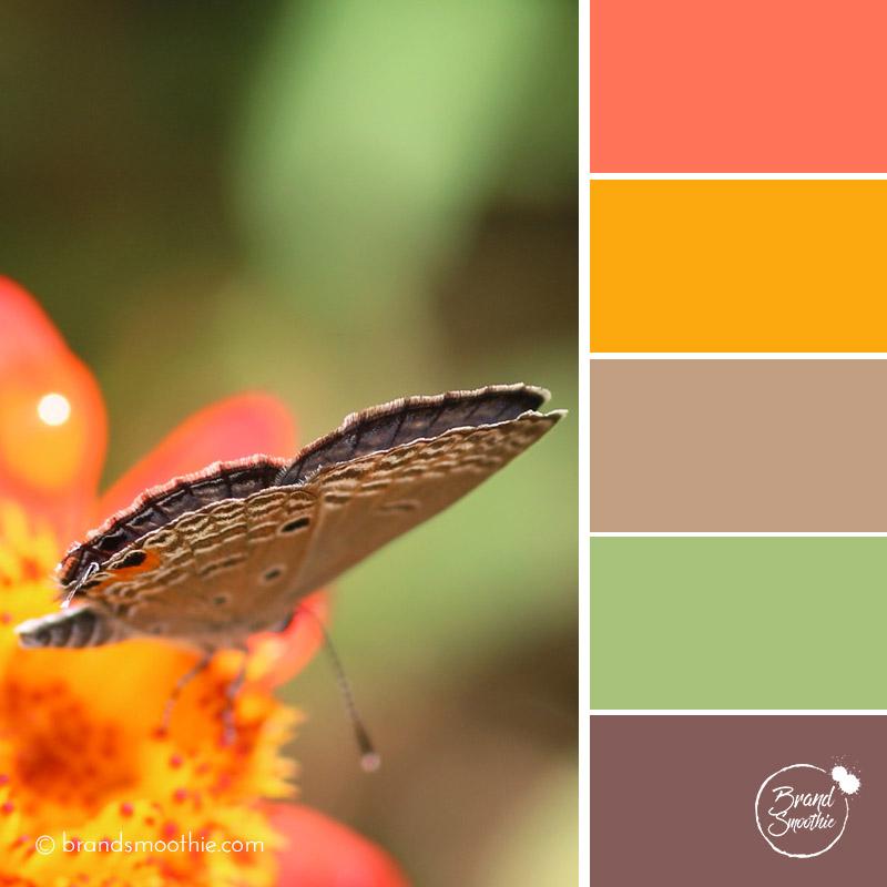 bs-colour-palette-orange-butterfly