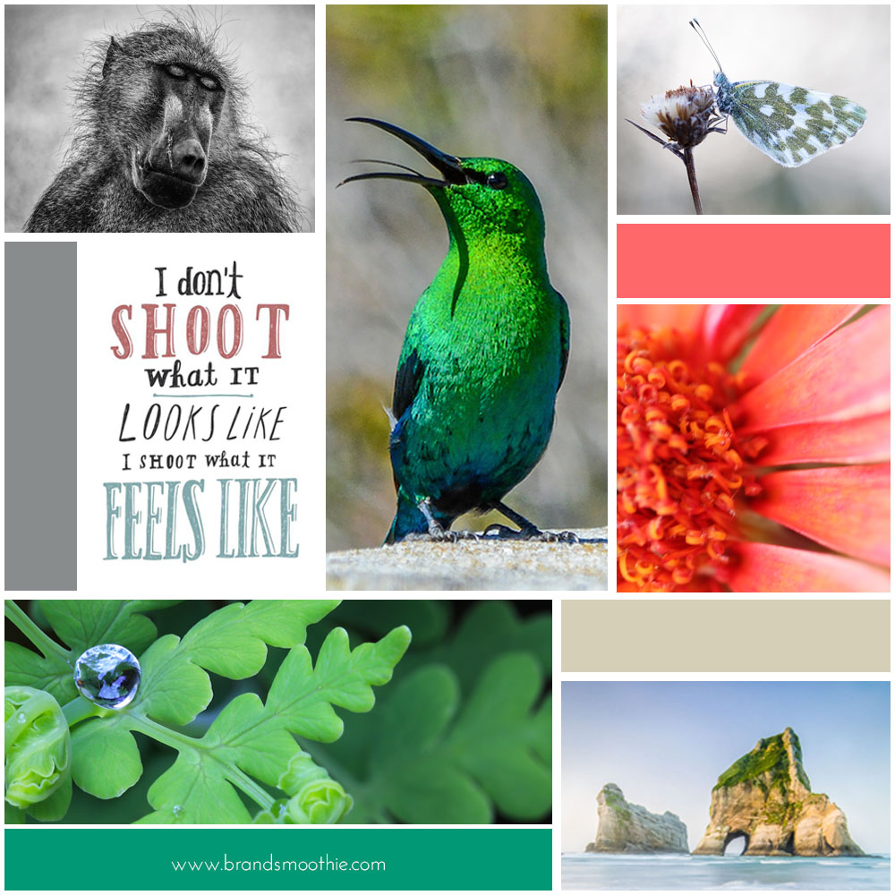 Female Nature Photography Branding and Moodboard